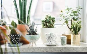 9 Tips on How to Decorate a Windowsill With Indoor Plants