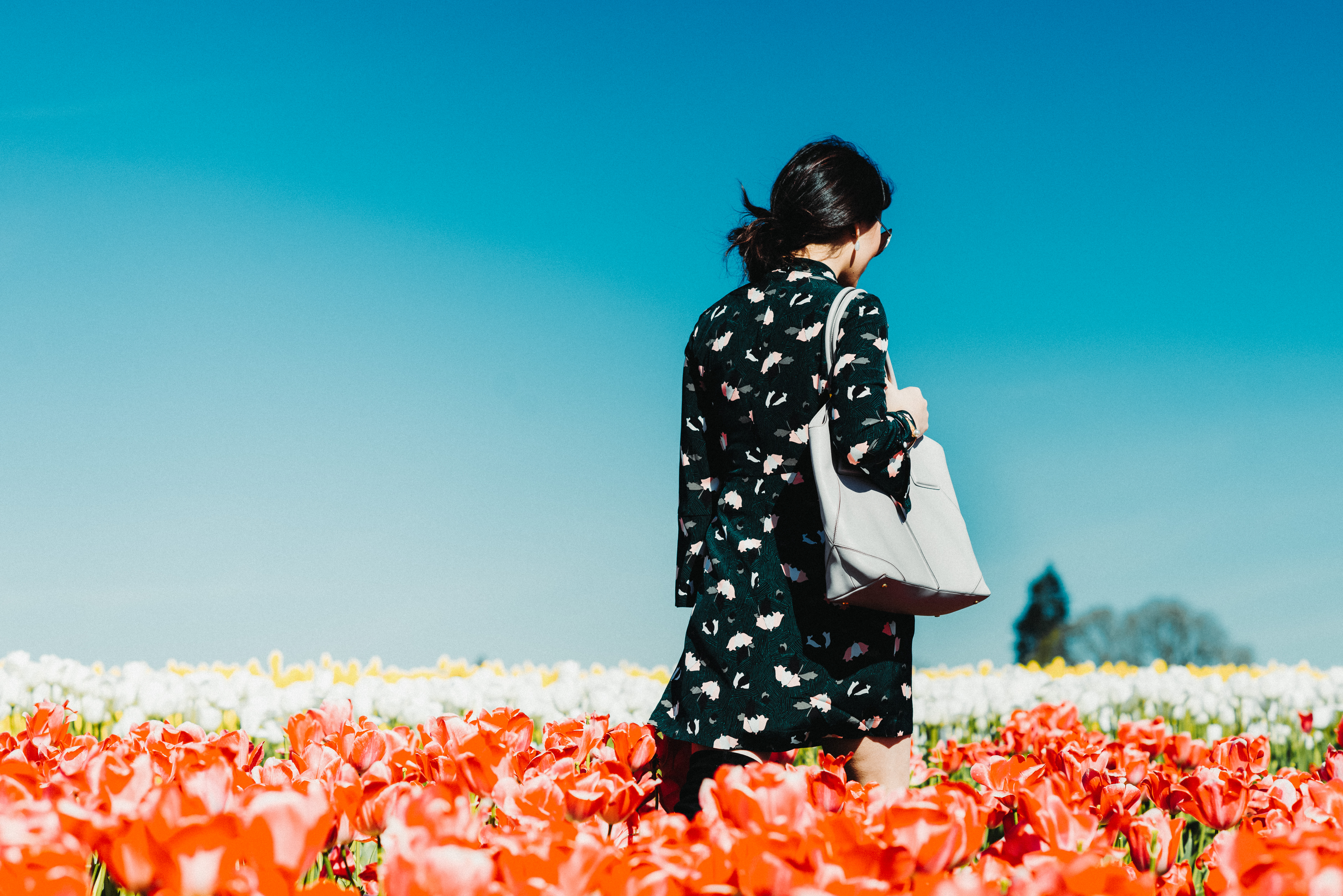 Dancing with Tulips