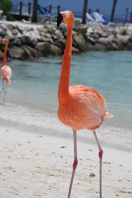 flamingo-641085_640